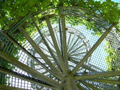 Aufwärtsspirale, Botanischer Garten Osnabrück, Foto von Dr. Axel Schlote