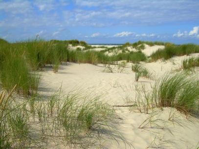 Streifzug durch die Dünen, Spiekeroog